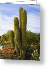 Cactus Monterey California Greeting Card