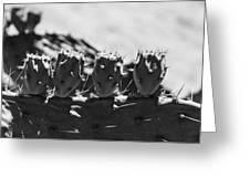 Cactus Nubs Greeting Card