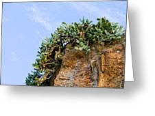 Cactus On A Cliff Greeting Card