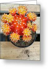 Cactus Orange Greeting Card
