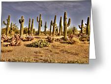 Cactus Patch Greeting Card by George Lenz