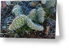 Cactus Plant 1 Greeting Card