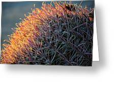 Cactus Rose Greeting Card