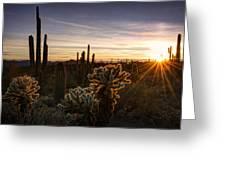 Cactus Sunset  Greeting Card