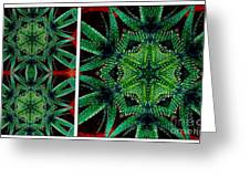 Cactus Triptych Greeting Card