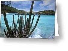Cactus Trunk Bay  Virgin Islands Greeting Card