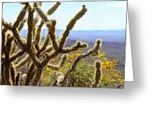 Cactus View Greeting Card