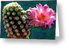 Cactus With Pink Sunlit Bloom Greeting Card