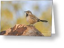 Cactus Wren On Rock Greeting Card