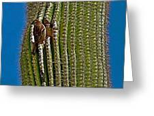 Cactus Wren With Offspring In A Saguaro Cactus In Tucson Sonoran Desert Museum-arizona Greeting Card