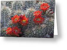 Cacus Blooms Greeting Card