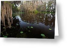 Caddo Lake, Texas's Largest Natural Lake Greeting Card