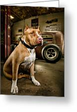 Caesar At Millers Chop Shop Greeting Card