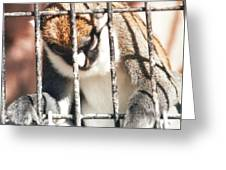 Caged But Strong Greeting Card