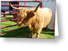 Caged Coo Greeting Card