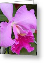 Cahleya Orchid Greeting Card