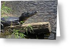 Caiman Greeting Card