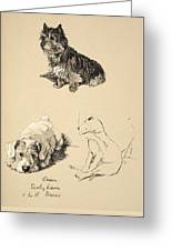 Cairn, Sealyham And Bull Terrier, 1930 Greeting Card