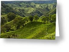 Caizan Hills Greeting Card