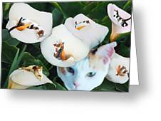 Cala In Callas Greeting Card
