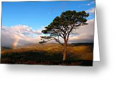 Caledonian Colours Greeting Card