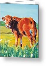 Calf Greeting Card
