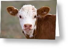 Calf Portrait Greeting Card