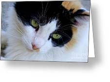 Calico 1 Greeting Card