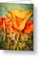 California Poppy Greeting Card by Pam Vick