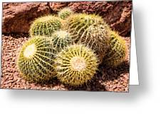 California Barrel Cactus Greeting Card
