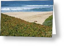 California Beach With Ice Plant Greeting Card by Carol Groenen