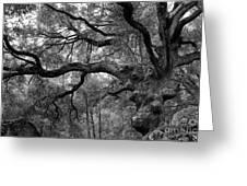 California Black Oak Tree Greeting Card