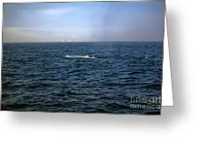 California Blue Whale Greeting Card