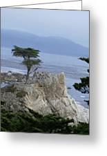 California Bonsai Greeting Card