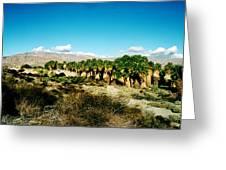 California Coachella Oasis1 Greeting Card