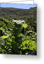 California Coast Hillside Flower 5d22613 Greeting Card by Wingsdomain Art and Photography