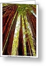 California Coastal Redwoods Greeting Card