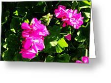 California Flowers Greeting Card