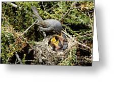 California Gnatcatcher Feeding Young Greeting Card