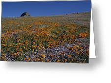 California Gold Poppies And Baby Blue Eyes Greeting Card