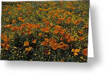 California Gold Poppies Greeting Card