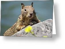 California Ground Squirrel Greeting Card