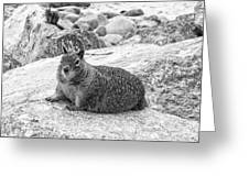 California Ground Squirrel In Black And White Greeting Card