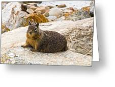 California Ground Squirrel With Sandy Nose Greeting Card