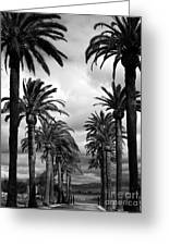 California Palms - Black And White Greeting Card