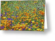 California Poppies And Desert Blubells Greeting Card