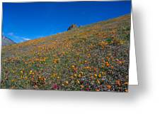 California Poppies Baby Blue Eyes And Owl Clover Greeting Card