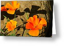 California Poppies - Crisp Shadows From The Desert Sun  Greeting Card