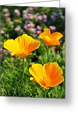 California Poppies In October Greeting Card