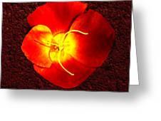 California Poppy By Nadine Johnston Greeting Card